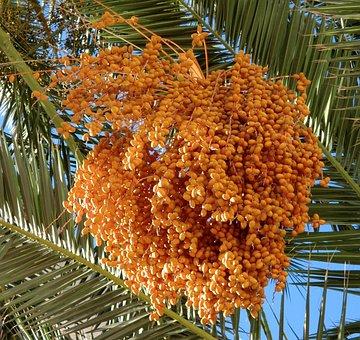 Food, Dates, Palm Tree, Orange