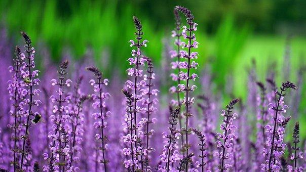 Flower, Pink, Pink Flowers, Nature, Petal, Garden