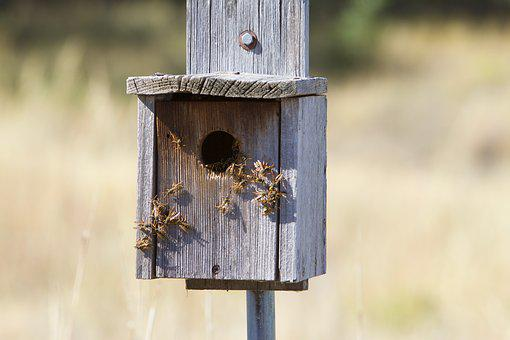 Wasps, Bees, Insect, Macro, Colony, Hive, Nest