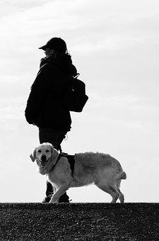 Dog, Human, Animal, Beach, Labrador