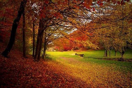 Autumn, Forest, Woods, Nature, Fall, Landscape, Season