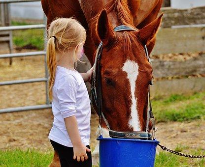 Little Girl, Big Horse, Stroke, Love, Fur, Hand
