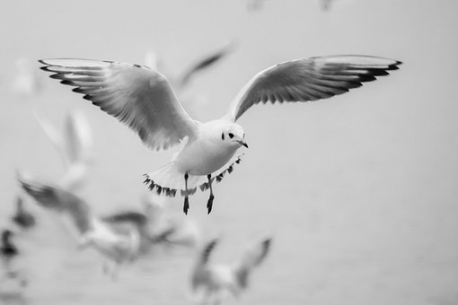 Seagull, Flight, Bird, Beach, Switzerland, Lake, White