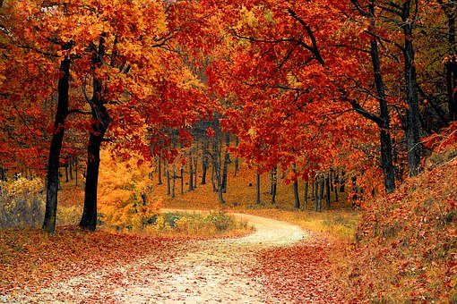 Road, Forest, Fall, Path, Trail, Trees, Woods, Foliage