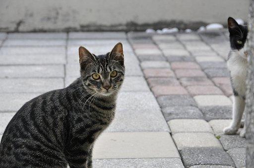 Cat, Kitty, Animal, Gaze, Eyes, Cats, Cute Cat