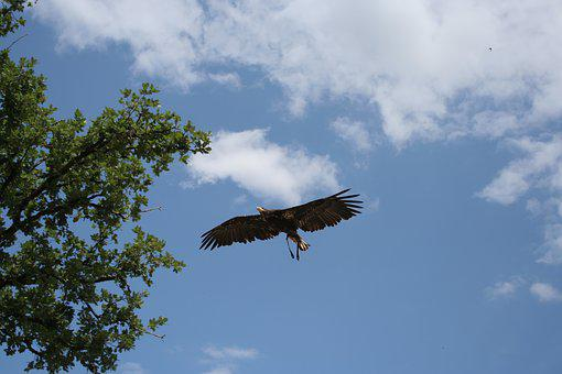 Eagle, Bird, Air, Clouds, Fly, Wings, Feathers, Span
