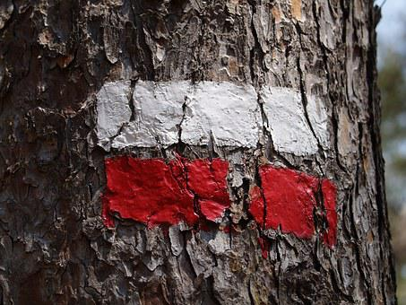 Tag, Wood, Flag, Red, White, Tour, Label, Tourist, Tree