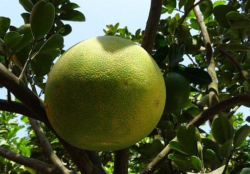 Fruit, Grapefruit, Ripe, Yellow, Citrus Paradisi