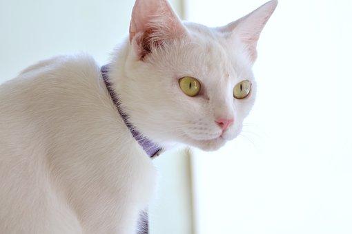 Cat, White Cat, Pet, Animal, Cute, Kitty, Kitten, Eyes