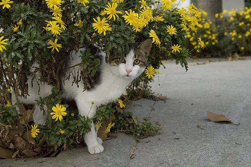 Cat, Street, Cute, Beautiful, Animal, Pets, Kitty