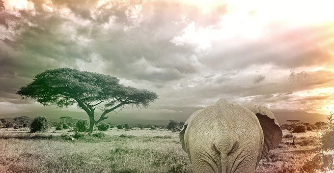 Elephant, Savanna Africa Animal, Safari, Wilderness