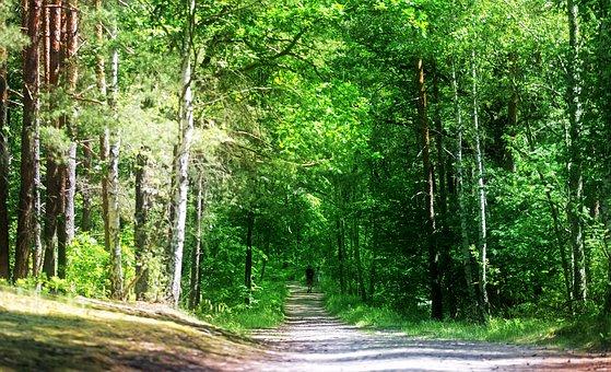 Landscape, Forest, Trees, Vegetation, Leaves, America