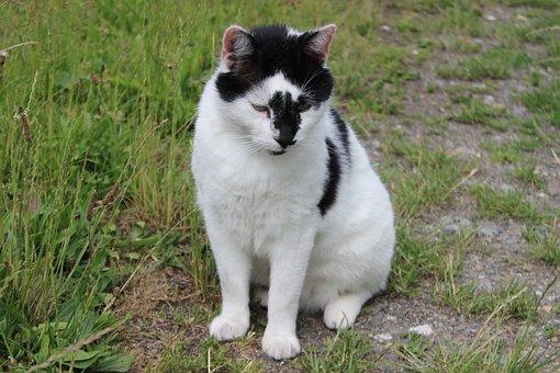 Cat, Domestic Cat, Pet, Animal World, Mieze