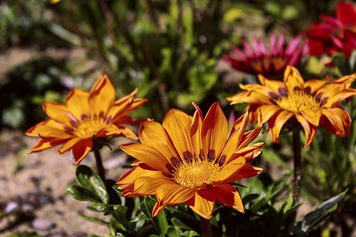 Flower, Color, Orange, Red, Green, Spring, Garden
