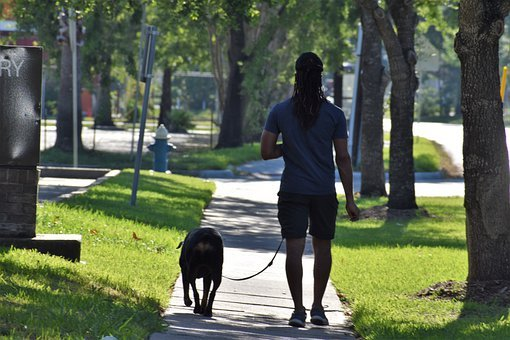 Dog, Dog Walking, Male, African American, Dog Lover