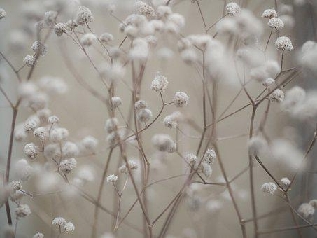 Dried, Flowers, Dry, Faded, Withered, Plant, Transience