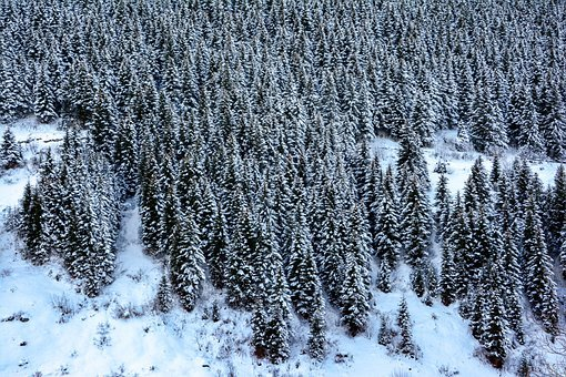 Snow, Mountain, Forest, Winter, Nature, Landscape