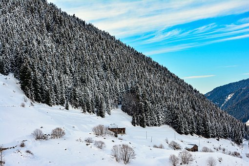 Snow, Mountain, Forest, Winter, Nature