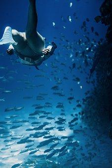 Underwater, Sea, Ocean, Water, Fish, Shark, Dolphin