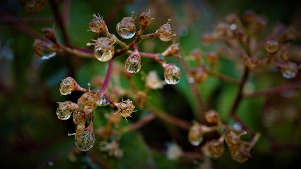 Nature, Water, Spider Webs, Thread, Reflection, Rain
