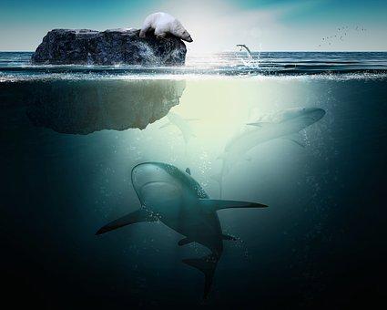 Shark, Polar Bear, Ocean, Nature, Fish, Sea, Arctic
