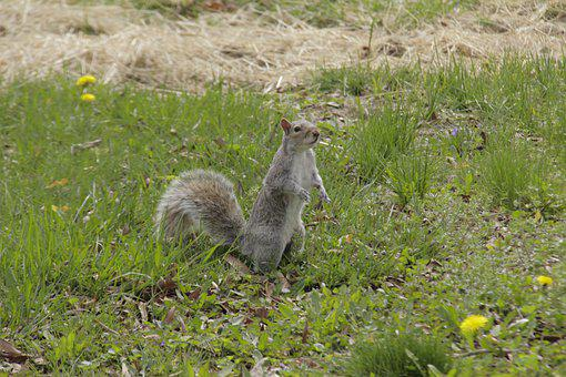 To Be Attentive, Look, Nature, Squirrel, Watching, Wild