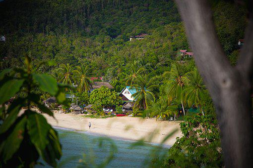 Beach, Beach Life, Palm Trees, Thailand