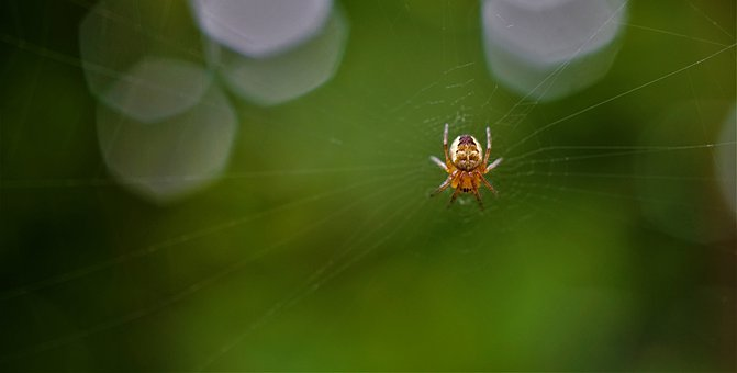 Small Spider, Cobweb, Insect, Nature, Small, Tiny