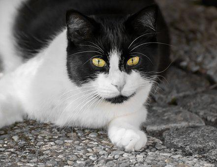 Cat, Domestic Cat, Cat's Eyes, Cat Face, View, Eyes