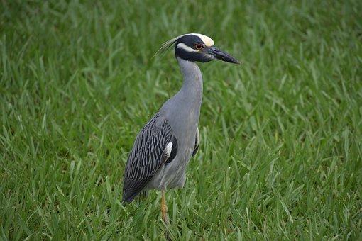 Stork, Bird, Nature, Wildlife, Beak, Rare, Animal