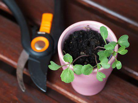 Seedling, Garden, Gardening, Spring, Plant