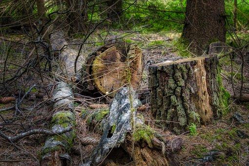Log, Like, Tribe, Tree, Break Up, Transience