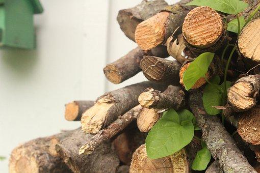 Logs, Leaves, Log, Nature, Wood, Green