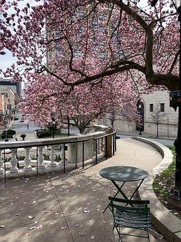 Magnolia, Baltimore, City, Maryland