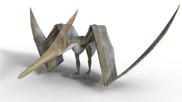 Pteranodon, Prehistoric Times, Pterosaur, Membranes