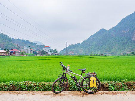 Rice, Trees, Green, Mountains, Hills, Cars, Airport