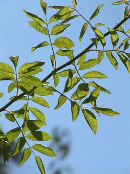Leaves, Sky, Green, Blue, Nature, Deciduous Tree