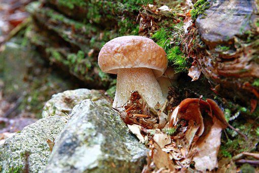 Fungus, Carpophore, Mycelium, Fruit, Autumn, Forest