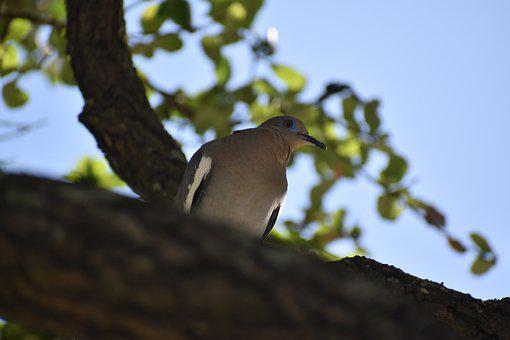 Bird, Dove, Pigeon, Hope, Symbol, Park, Peaceful, God