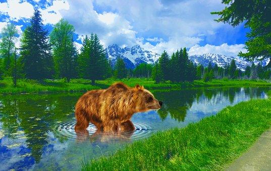 Wyoming, Grand Tetons, Brown Bear, Landscape