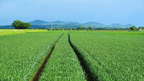 Field, Agriculture, Trace, Mountains