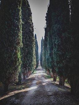 Green, Trees, Way, Mood, Memories, Sky, Sun, Sunday
