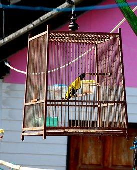 Bird, Thailand, Animal World, Feather, Nest, Plumage