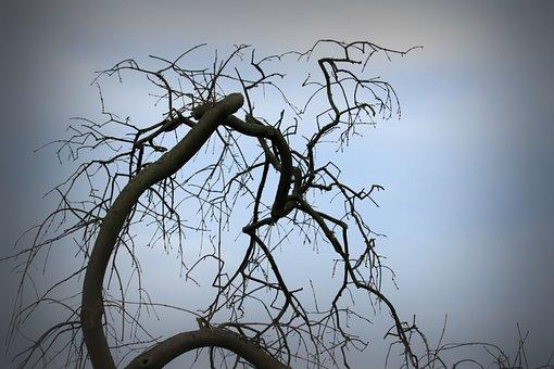 Tree, Bald, Silhouette, Evening, Nature, Landscape