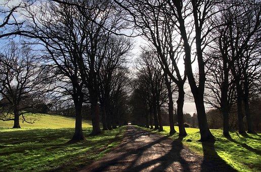 Avenue, Trees, Spring, Shadows, Path, Road, Trail, Walk