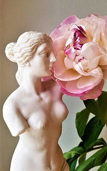 Venus, Beautiful, Beauty, The Peony, White, Essential