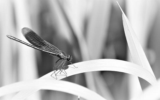 Fly, Dragonfly, Nature, Close Up, Wings, Bug, Animal
