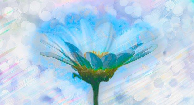 Flower, Plant, Inner Peace, Intimate, Calm, Blessing
