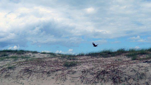 Sky, Bird, Sunset, Flying, Sand, Landscape, Nature