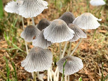 Mushrooms, Mushroom, Fungus, Autumn, Forest, Fungi